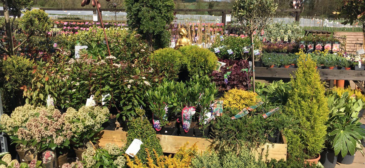 M & L Garden Centres Comes to Brocksbushes