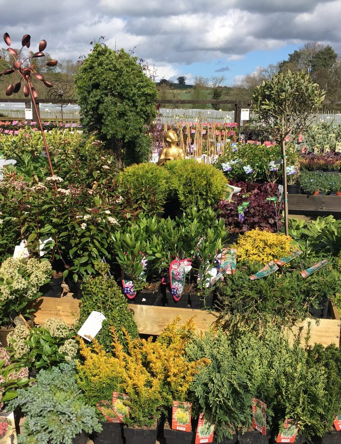 M & L Garden Centres Comes to Brocksbushes