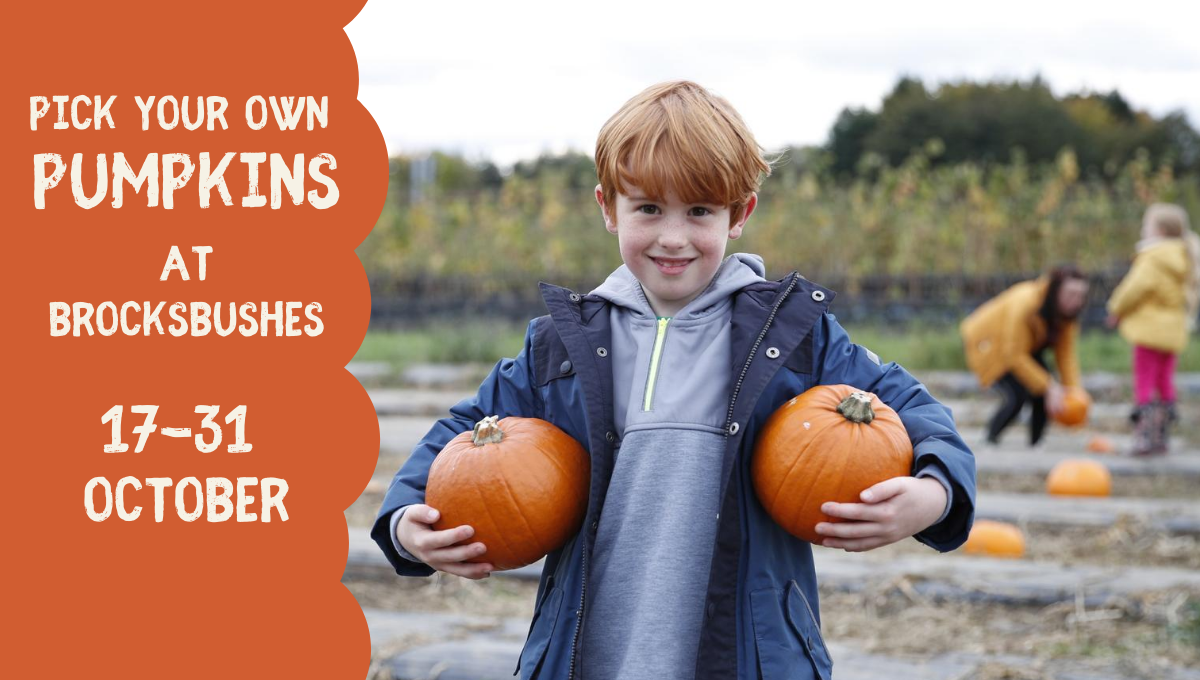 Pick Your Own Pumpkins at Brocksbushes!