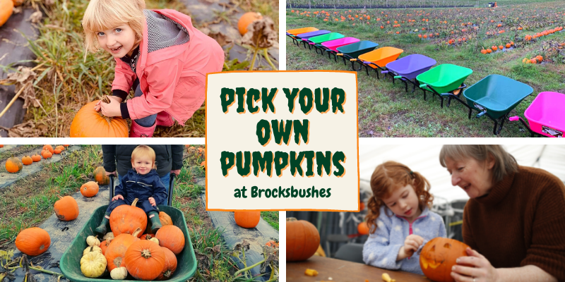 Pick Your Own Pumpkins 2021